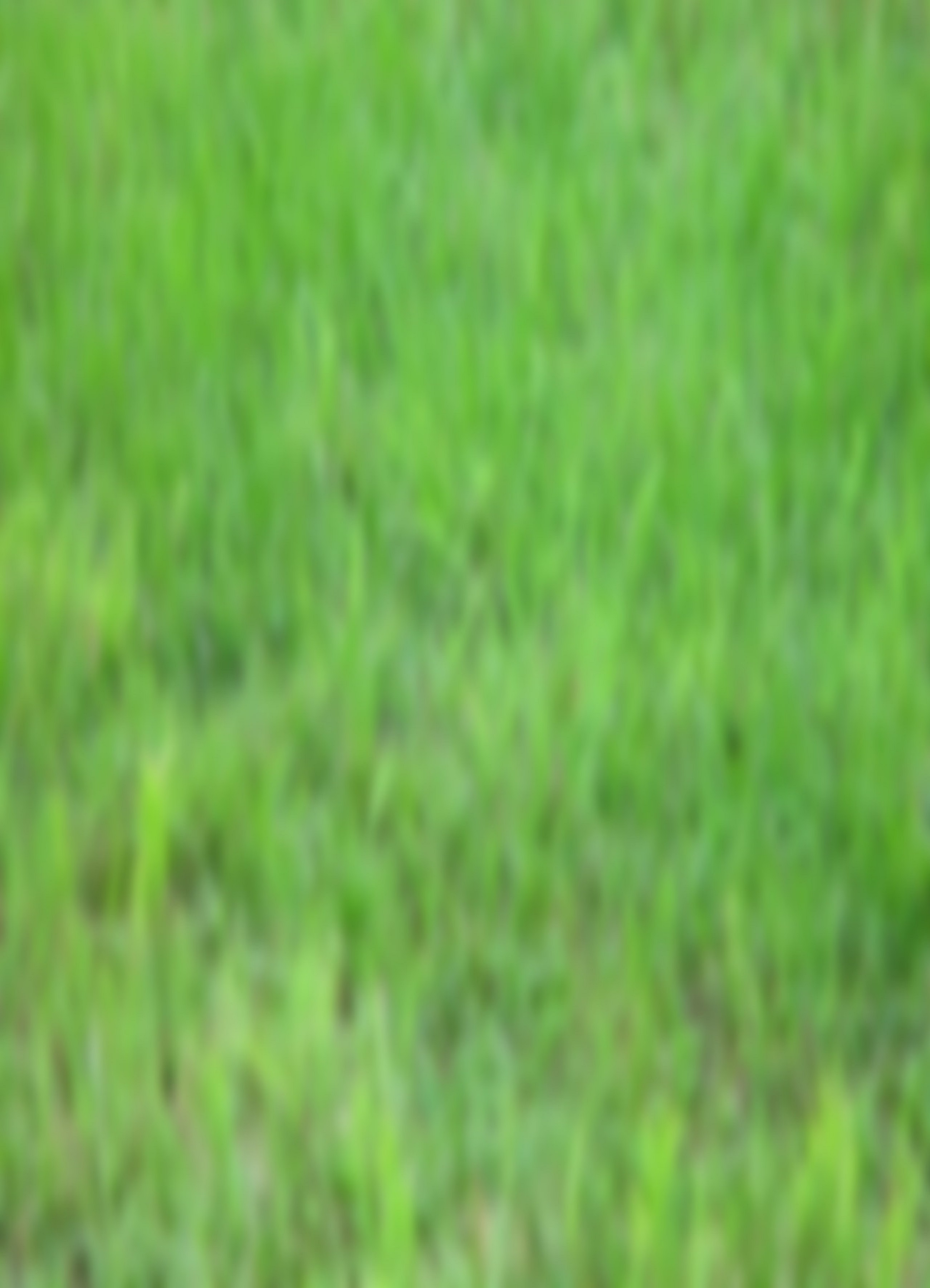 blurred grass12